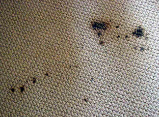 Spot & Stain Removal South San Francisco